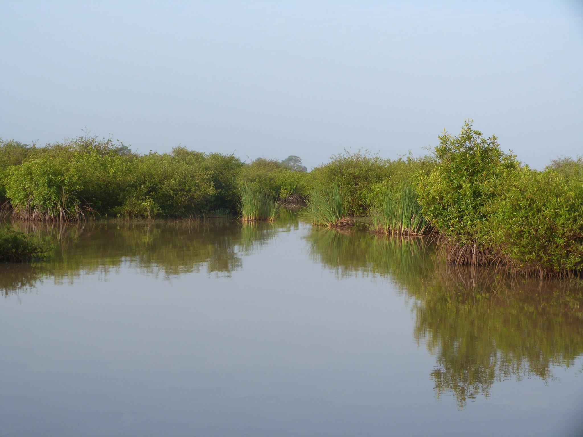 mangrove Saint-Louis Sénégal