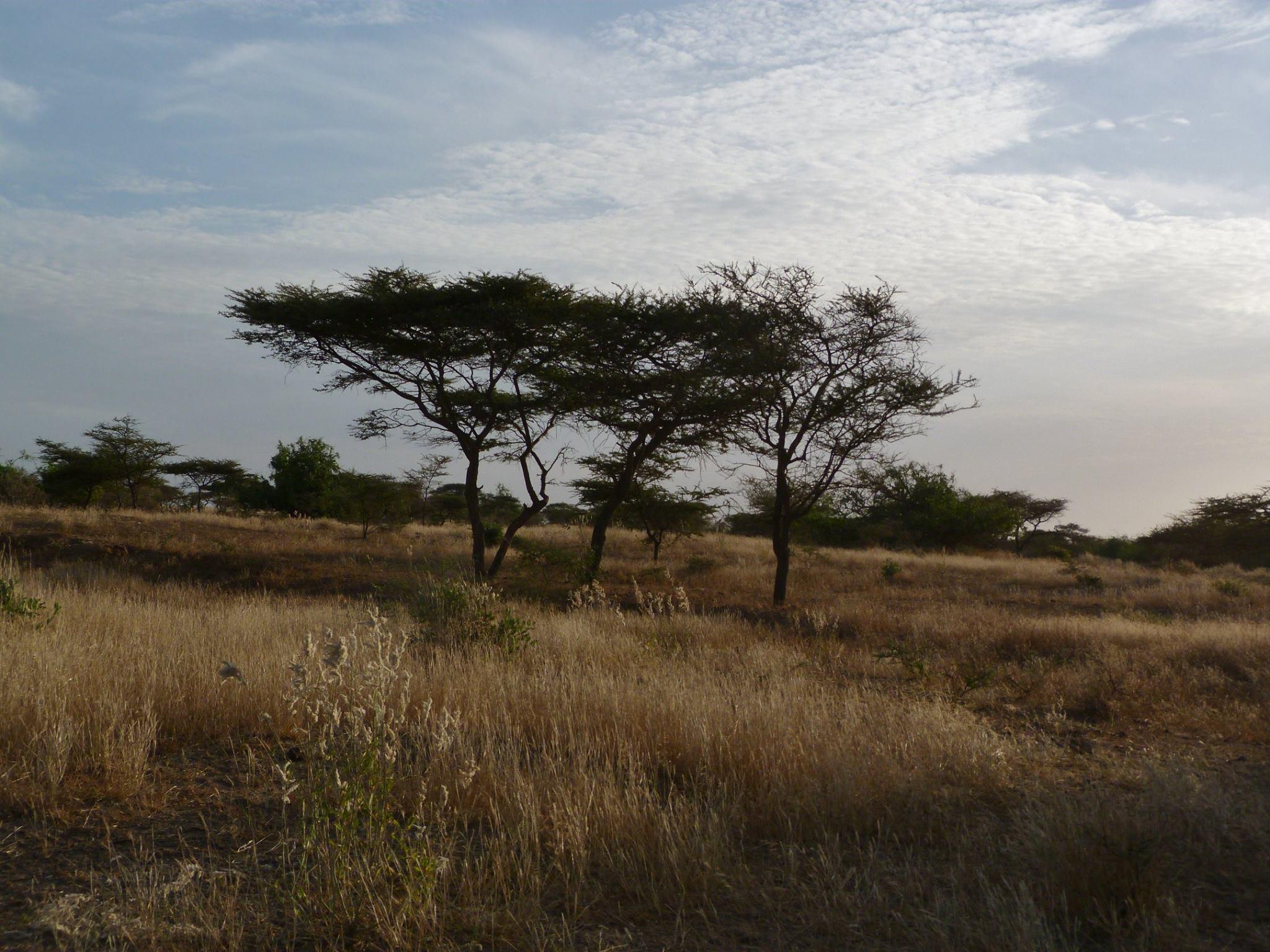 brousse Saint-Louis Sénégal