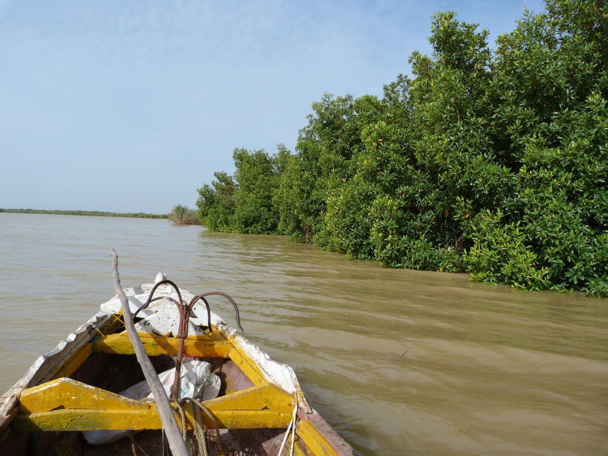 Mangrove Bango Saint-Louis Sénéga
