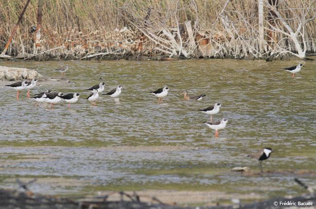 Bango oiseaux lac